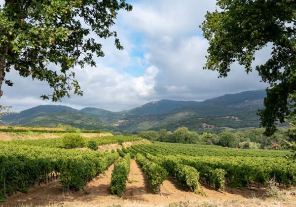 Vineyard Villas Holiday Villas In South Of France