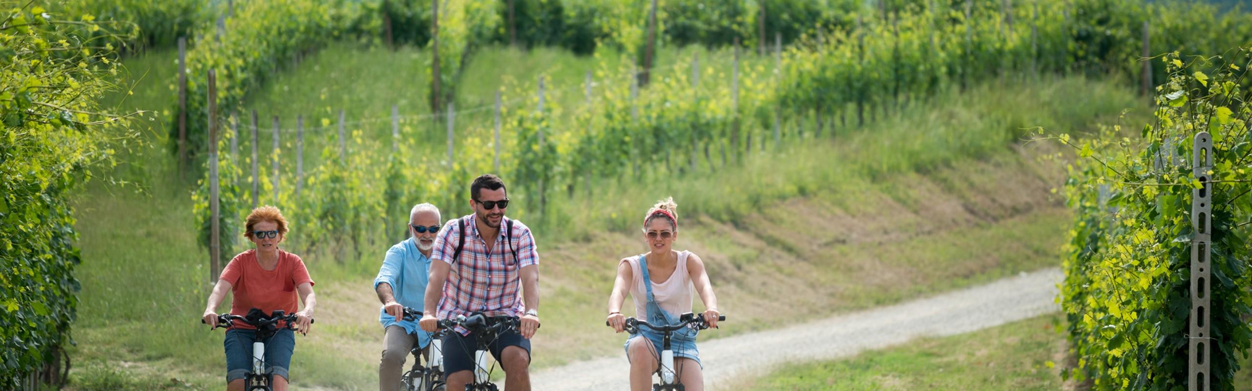 Provence Cycling